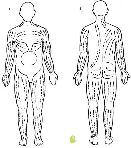 лимфотоки на теле человека